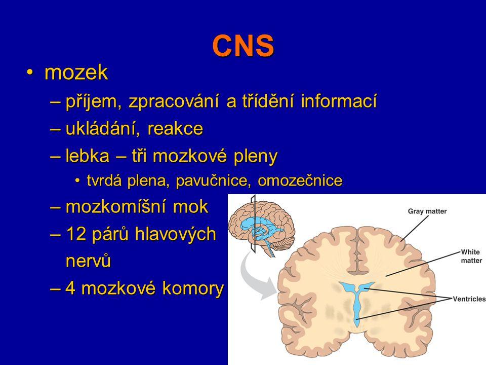 CNS mozekmozek –příjem, zpracování a třídění informací –ukládání, reakce –lebka – tři mozkové pleny tvrdá plena, pavučnice, omozečnicetvrdá plena, pav