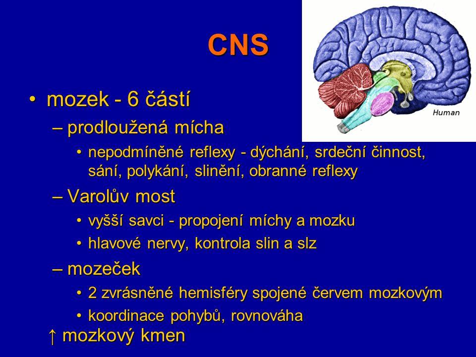 CNS mozek - 6 částímozek - 6 částí –prodloužená mícha nepodmíněné reflexy - dýchání, srdeční činnost, sání, polykání, slinění, obranné reflexynepodmín