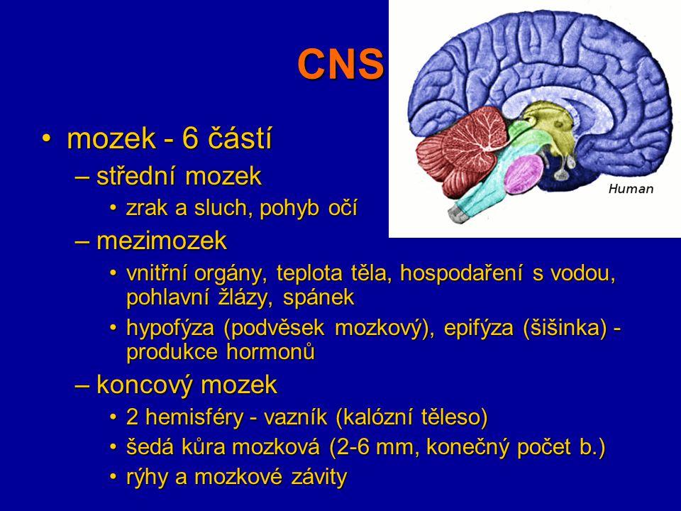 CNS mozek - 6 částímozek - 6 částí –střední mozek zrak a sluch, pohyb očízrak a sluch, pohyb očí –mezimozek vnitřní orgány, teplota těla, hospodaření
