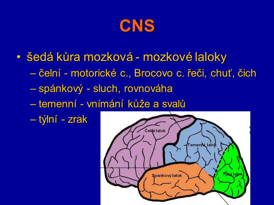 CNS šedá kůra mozková - mozkové lalokyšedá kůra mozková - mozkové laloky –čelní - motorické c., Brocovo c. řeči, chuť, čich –spánkový - sluch, rovnová