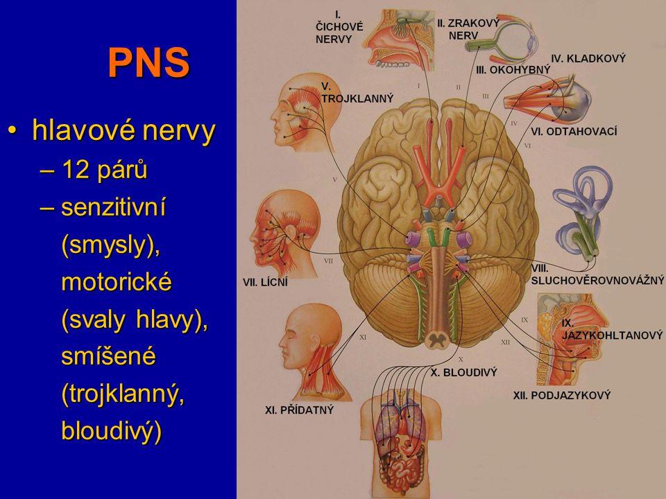 PNS hlavové nervyhlavové nervy –12 párů –senzitivní (smysly),motorické (svaly hlavy), smíšené(trojklanný,bloudivý)