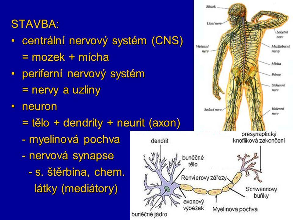 STAVBA: centrální nervový systém (CNS)centrální nervový systém (CNS) = mozek + mícha periferní nervový systémperiferní nervový systém = nervy a uzliny