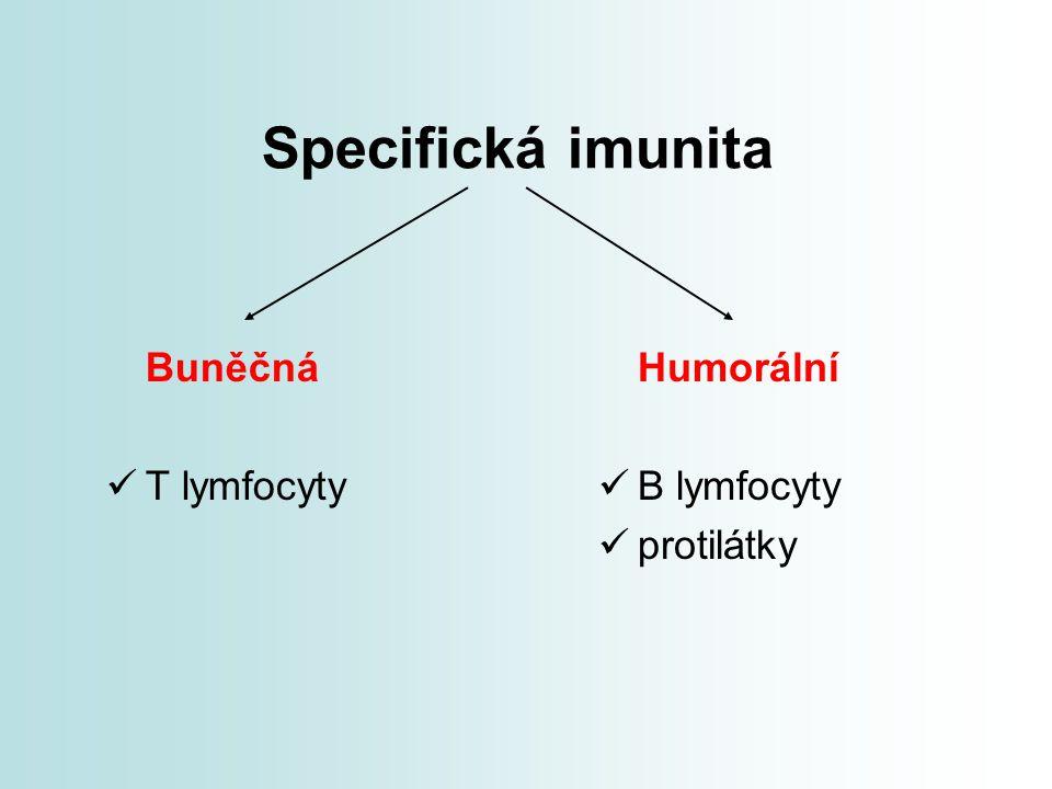 Specifická imunita Buněčná T lymfocyty Humorální B lymfocyty protilátky