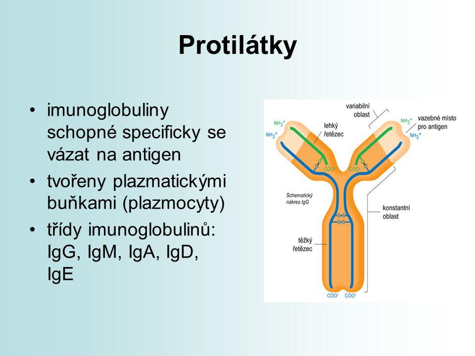 Protilátky imunoglobuliny schopné specificky se vázat na antigen tvořeny plazmatickými buňkami (plazmocyty) třídy imunoglobulinů: IgG, IgM, IgA, IgD,