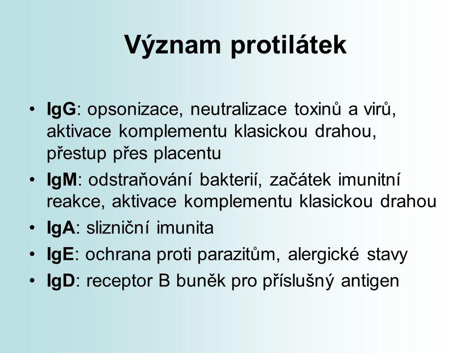 Význam protilátek IgG: opsonizace, neutralizace toxinů a virů, aktivace komplementu klasickou drahou, přestup přes placentu IgM: odstraňování bakterií