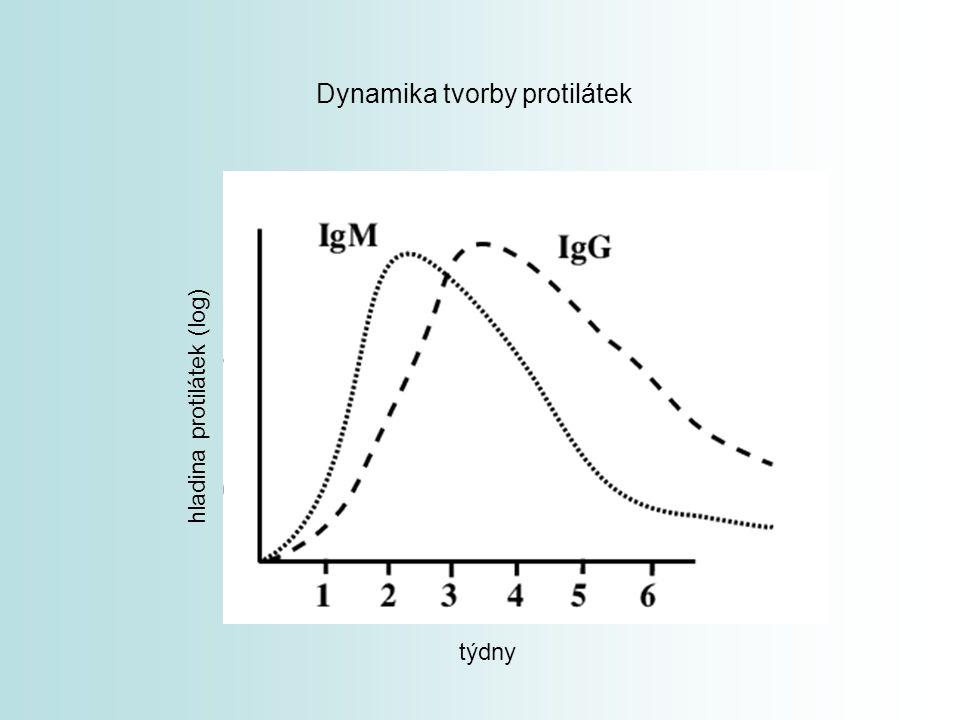 týdny hladina protilátek (log) Dynamika tvorby protilátek