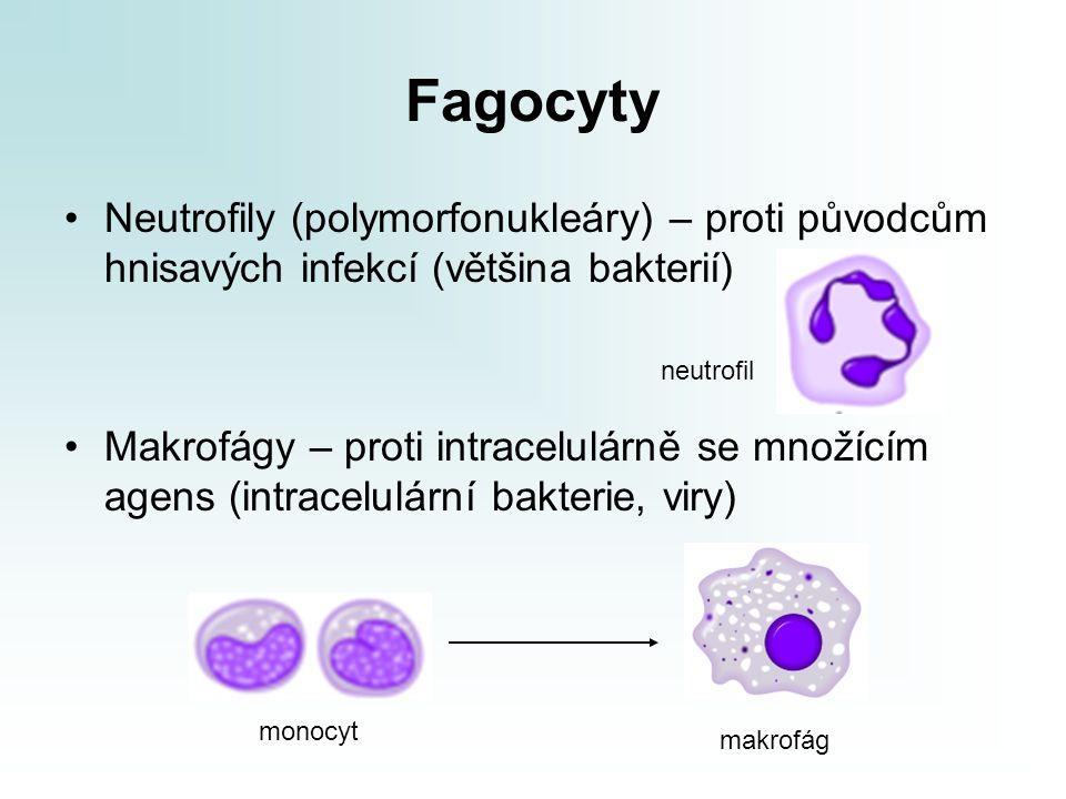 Fagocyty Neutrofily (polymorfonukleáry) – proti původcům hnisavých infekcí (většina bakterií) Makrofágy – proti intracelulárně se množícím agens (intr