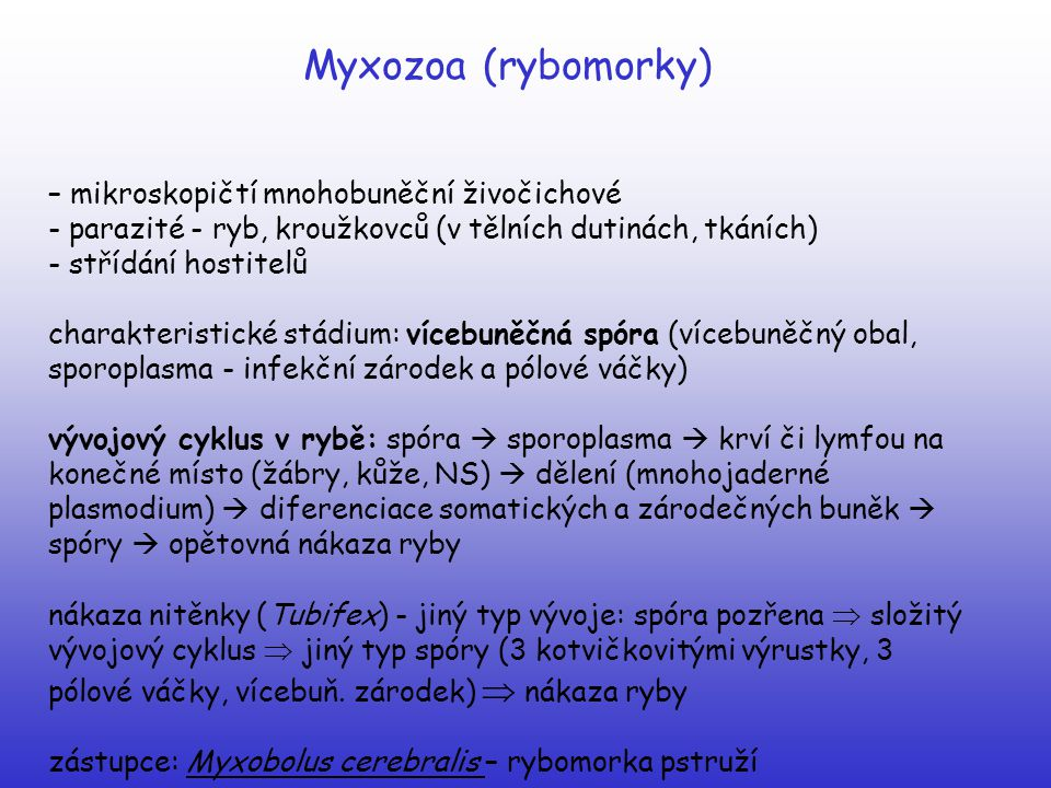 Platyhelminthes (ploštěnci) Trematoda (motolice) Schistosoma mansoni (krevnička střevní) gonochorista (samice je zachycena v břišní rýze samce) DH – člověk (cévy močového měchýře) MZH – vodní plž Biomphalaria glabra Vývoj:  vajíčko ve vodě - miracidium  okružák (Biomphalaria) – sporocysty  redie  cerkárie  furkocerkarie - přes pokožku do člověka - přes krevní oběh - žíly tlustého střeva a konečníku  párování - vajíčko s hrotem proniká do střeva a se stolicí ven  onemocnění - střevní schistomatóza