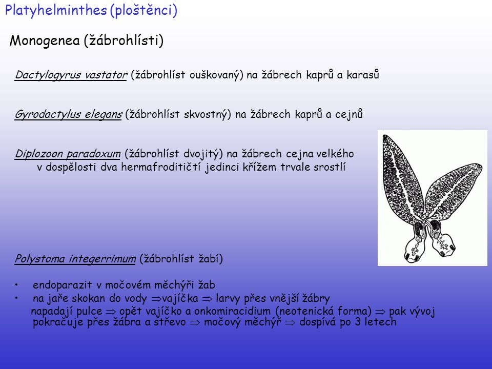 Platyhelminthes (ploštěnci) Monogenea (žábrohlísti) Dactylogyrus vastator (žábrohlíst ouškovaný) na žábrech kaprů a karasů Gyrodactylus elegans (žábro