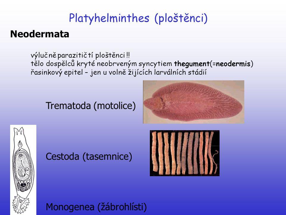 Platyhelminthes (ploštěnci) Monogenea (žábrohlísti) Dactylogyrus vastator (žábrohlíst ouškovaný) na žábrech kaprů a karasů Gyrodactylus elegans (žábrohlíst skvostný) na žábrech kaprů a cejnů Diplozoon paradoxum (žábrohlíst dvojitý) na žábrech cejna velkého v dospělosti dva hermafroditičtí jedinci křížem trvale srostlí Polystoma integerrimum (žábrohlíst žabí) endoparazit v močovém měchýři žab na jaře skokan do vody  vajíčka  larvy přes vnější žábry napadají pulce  opět vajíčko a onkomiracidium (neotenická forma)  pak vývoj pokračuje přes žábra a střevo  močový měchýř  dospívá po 3 letech
