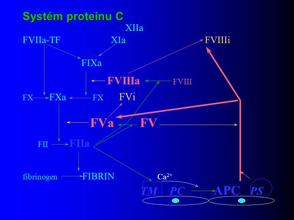 Systém proteinu C