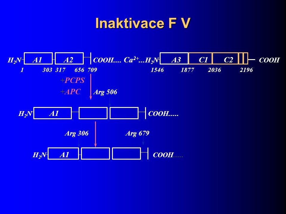 Inaktivace F V H 2 N A1 A2 COOH.... Ca 2+... H 2 N A3 C1 C2 COOH 1 303 317 656 709 1546 1877 2036 2196 +PCPS +APC Arg 506 H 2 N A1 COOH..... Arg 306 A