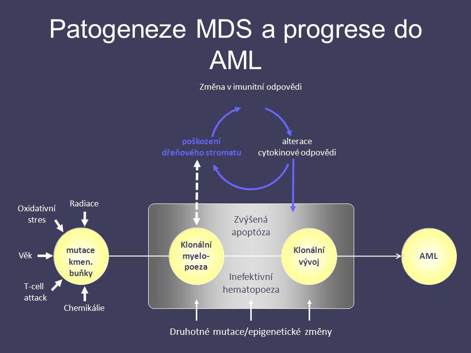 Klonální myelo- poeza Klonální vývoj AML Inefektivní hematopoeza Zvýšená apoptóza poškození dřeňového stromatu Změna v imunitní odpovědi alterace cyto