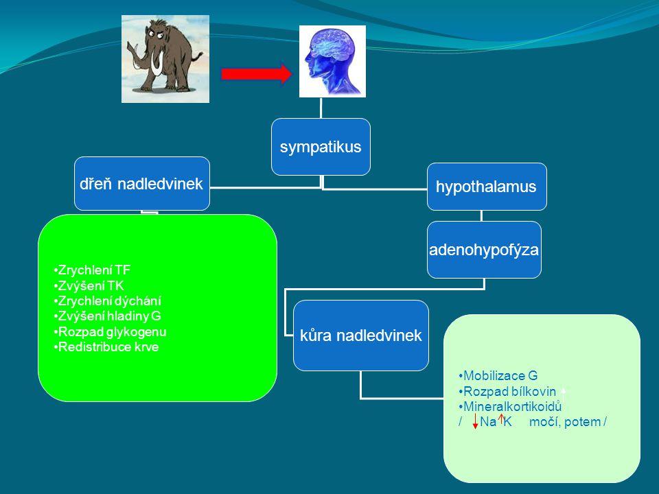 dřeň nadledvinek hypothalamus adenohypofýza kůra nadledvinek sympatikus Zrychlení TF Zvýšení TK Zrychlení dýchání Zvýšení hladiny G Rozpad glykogenu R