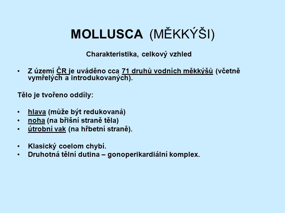 MOLLUSCA (MĚKKÝŠI) Charakteristika, celkový vzhled Z území ČR je uváděno cca 71 druhů vodních měkkýšů (včetně vymřelých a introdukovaných).