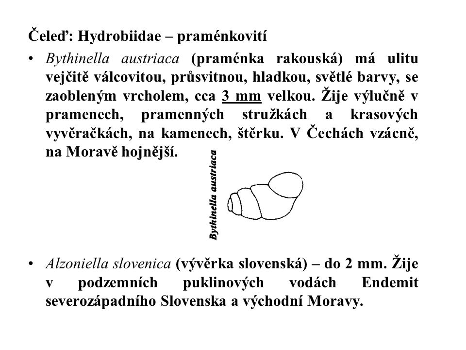 Čeleď: Hydrobiidae – praménkovití Bythinella austriaca (praménka rakouská) má ulitu vejčitě válcovitou, průsvitnou, hladkou, světlé barvy, se zaoblený