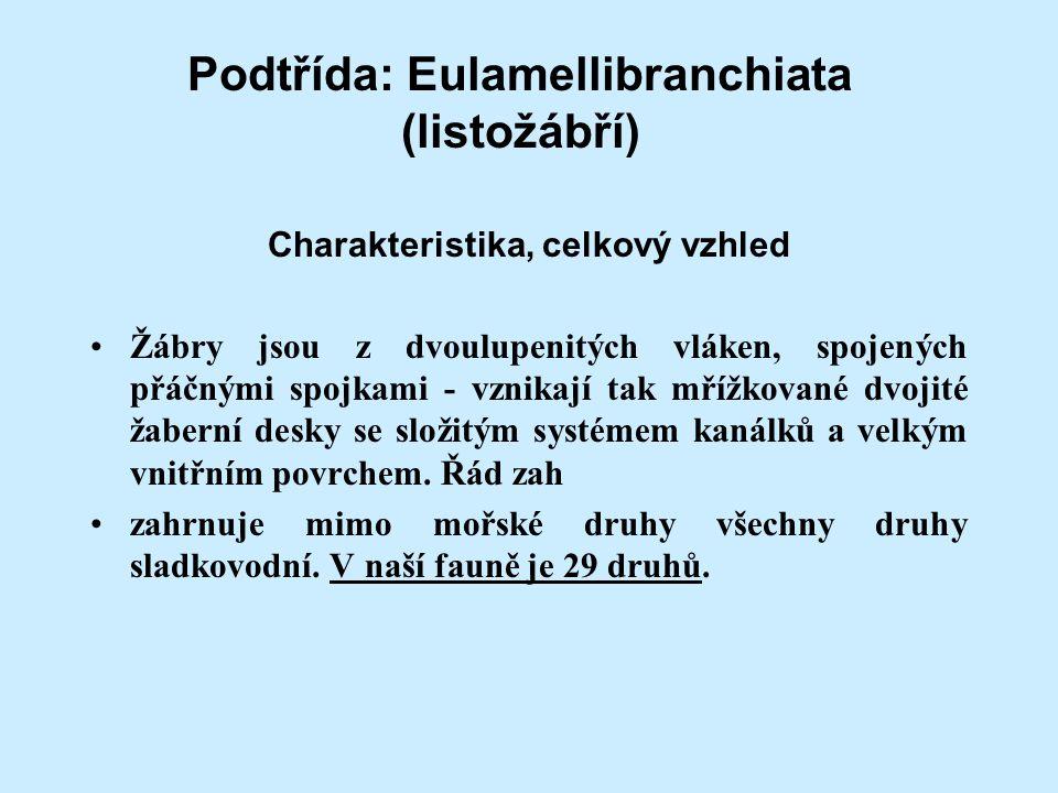 Podtřída: Eulamellibranchiata (listožábří) Charakteristika, celkový vzhled Žábry jsou z dvoulupenitých vláken, spojených přáčnými spojkami - vznikají tak mřížkované dvojité žaberní desky se složitým systémem kanálků a velkým vnitřním povrchem.