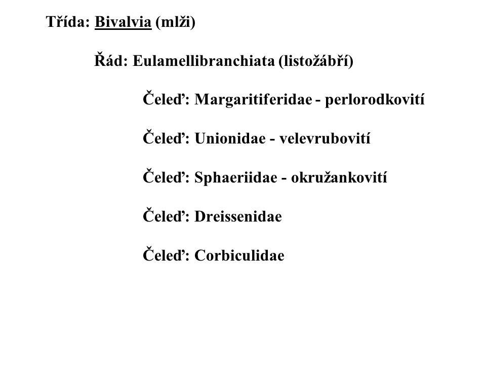 Třída: Bivalvia (mlži) Řád: Eulamellibranchiata (listožábří) Čeleď: Margaritiferidae - perlorodkovití Čeleď: Unionidae - velevrubovití Čeleď: Sphaeriidae - okružankovití Čeleď: Dreissenidae Čeleď: Corbiculidae