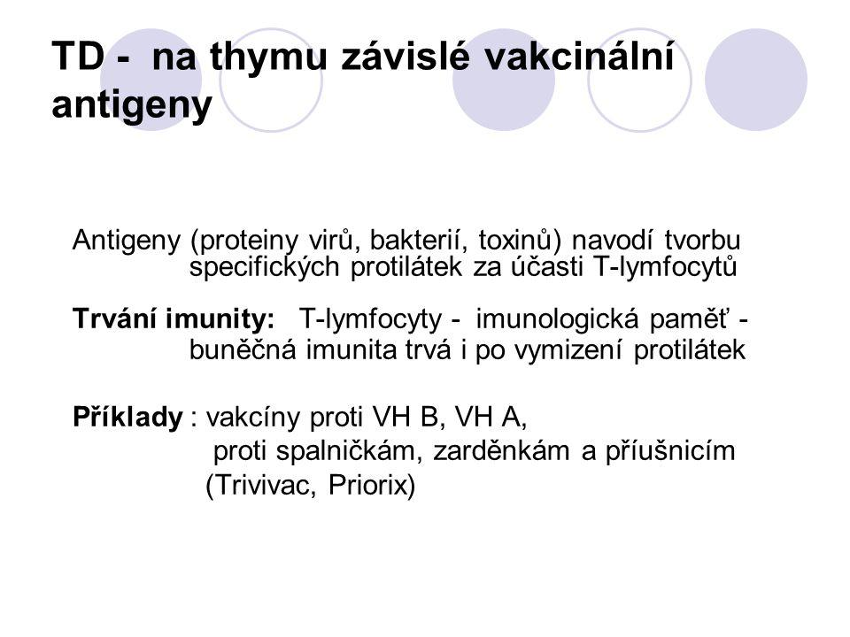 TD - na thymu závislé vakcinální antigeny Antigeny (proteiny virů, bakterií, toxinů) navodí tvorbu specifických protilátek za účasti T-lymfocytů Trván