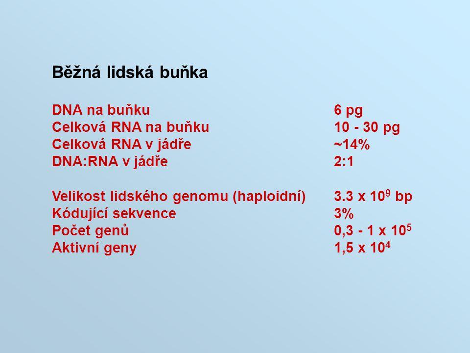 Běžná lidská buňka DNA na buňku6 pg Celková RNA na buňku10 - 30 pg Celková RNA v jádře~14% DNA:RNA v jádře2:1 Velikost lidského genomu (haploidní)3.3