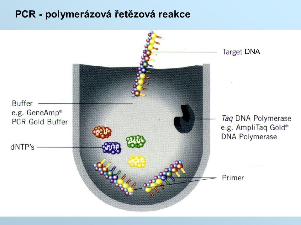 DNA PCR - polymerázová řetězová reakce