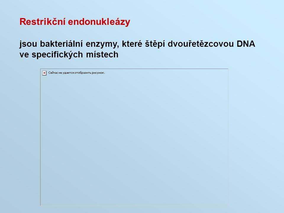 Restrikční endonukleázy jsou bakteriální enzymy, které štěpí dvouřetězcovou DNA ve specifických místech