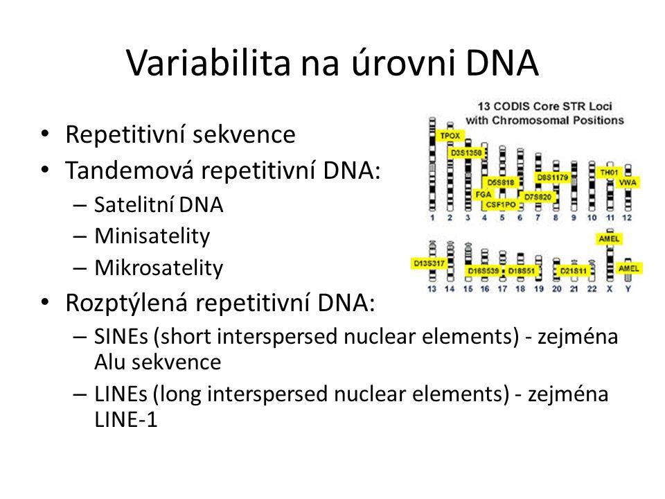 Variabilita na úrovni DNA Repetitivní sekvence Tandemová repetitivní DNA: – Satelitní DNA – Minisatelity – Mikrosatelity Rozptýlená repetitivní DNA: –