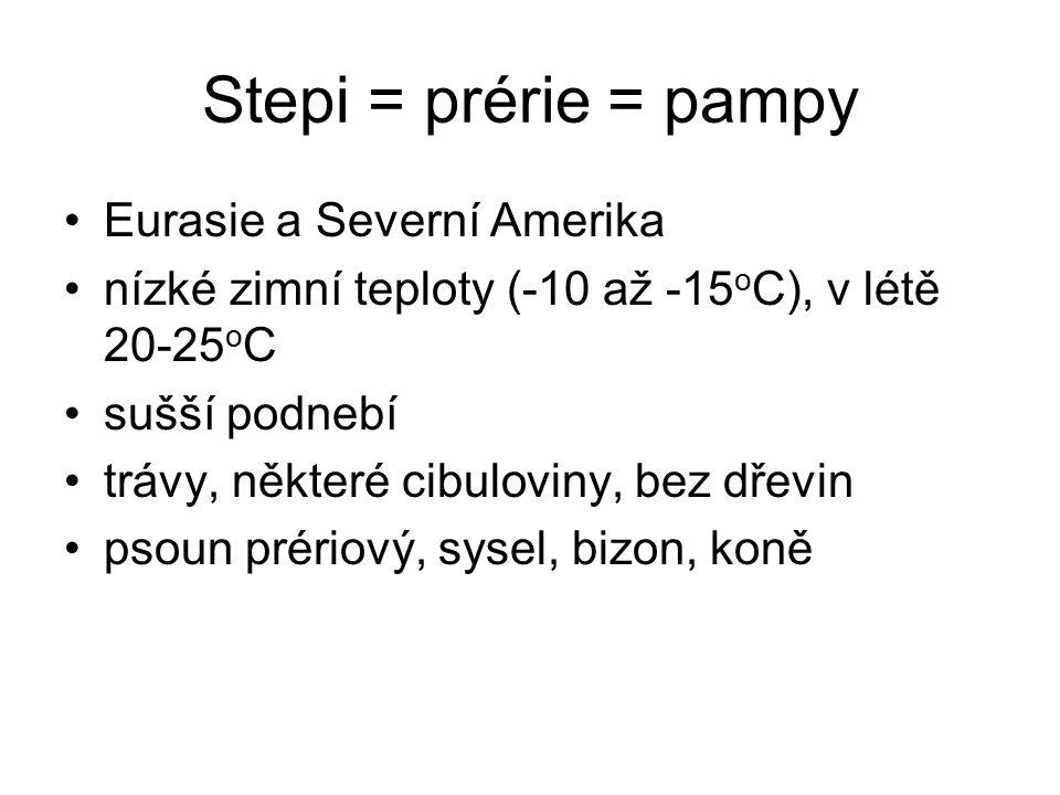 Stepi = prérie = pampy Eurasie a Severní Amerika nízké zimní teploty (-10 až -15 o C), v létě 20-25 o C sušší podnebí trávy, některé cibuloviny, bez dřevin psoun prériový, sysel, bizon, koně