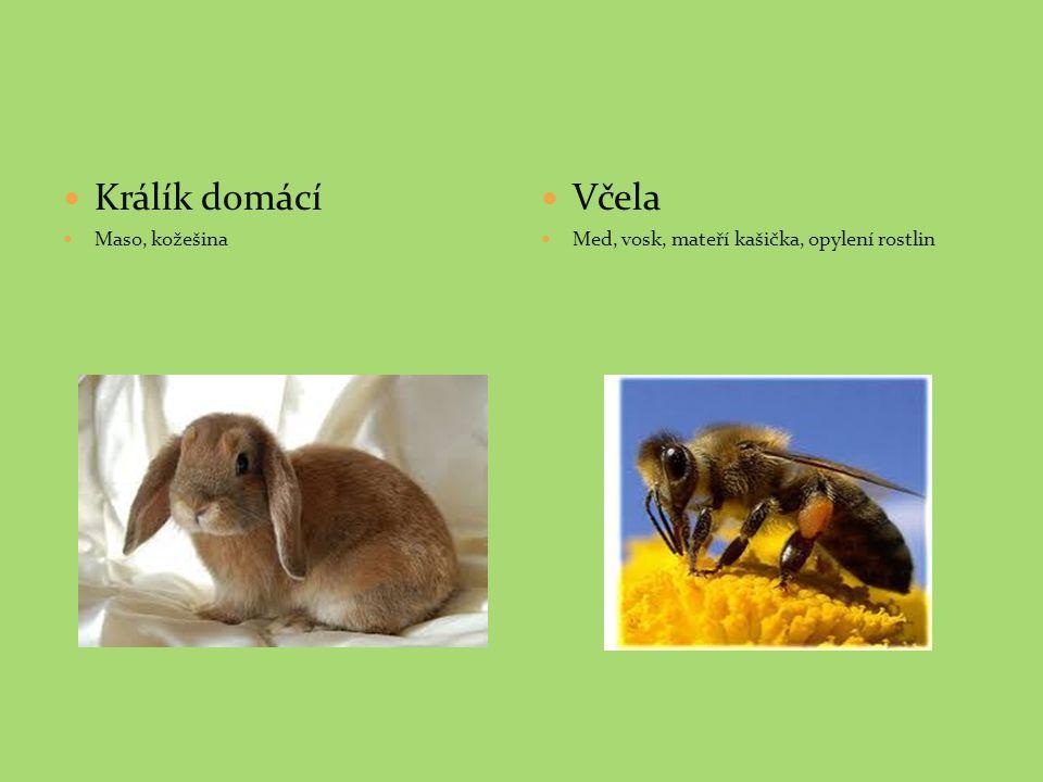 Králík domácí Maso, kožešina Včela Med, vosk, mateří kašička, opylení rostlin