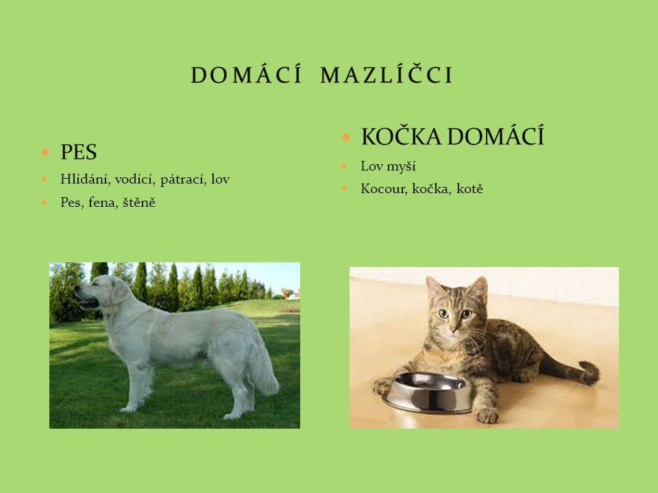 PES Hlídání, vodící, pátrací, lov Pes, fena, štěně KOČKA DOMÁCÍ Lov myší Kocour, kočka, kotě