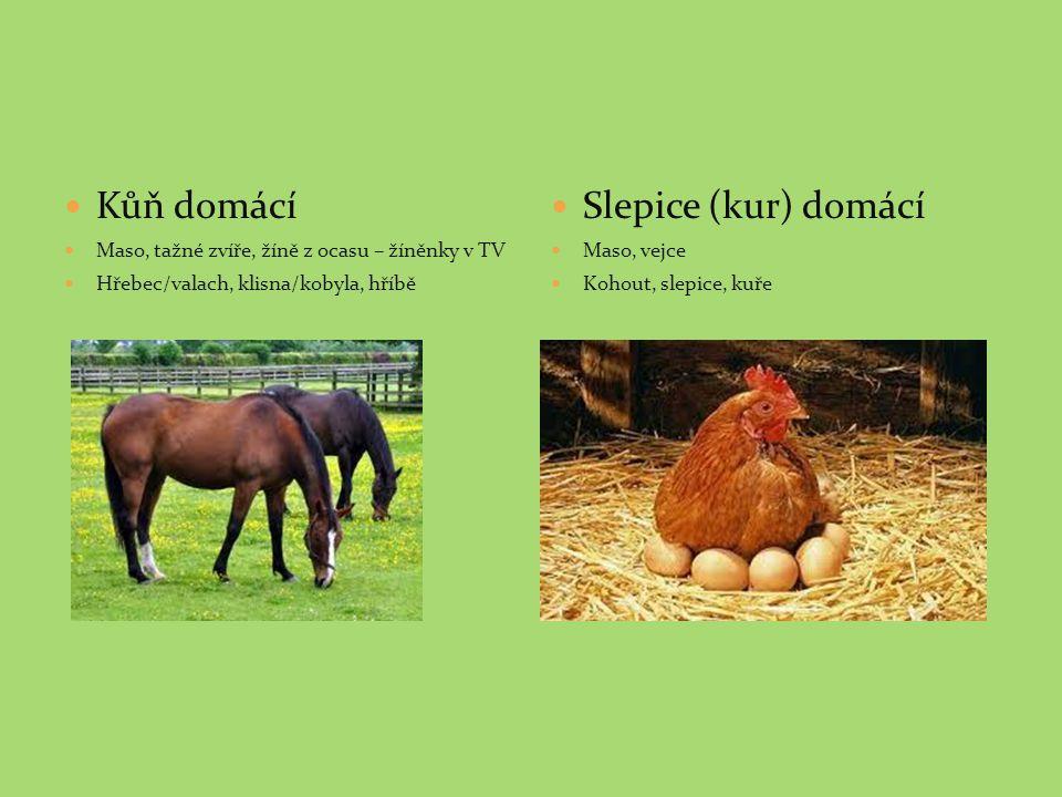 Kůň domácí Maso, tažné zvíře, žíně z ocasu – žíněnky v TV Hřebec/valach, klisna/kobyla, hříbě Slepice (kur) domácí Maso, vejce Kohout, slepice, kuře