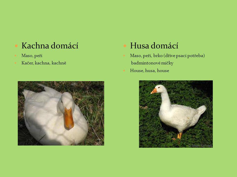 Kachna domácí Maso, peří Kačer, kachna, kachně Husa domácí Maso, peří, brko (dříve psací potřeba) badmintonové míčky House, husa, house