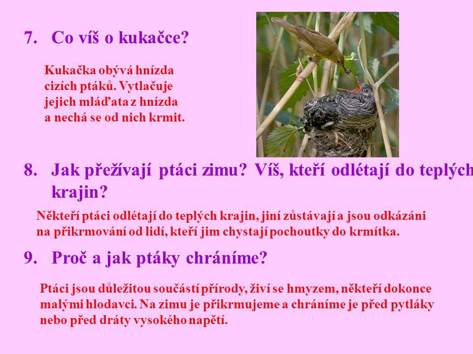 7.Co víš o kukačce? 8.Jak přežívají ptáci zimu? Víš, kteří odlétají do teplých krajin? 9.Proč a jak ptáky chráníme? Kukačka obývá hnízda cizích ptáků.