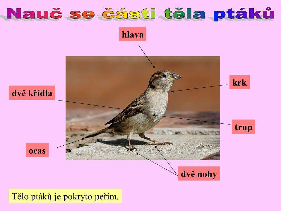 krk hlava trup ocas dvě nohy dvě křídla Tělo ptáků je pokryto peřím.