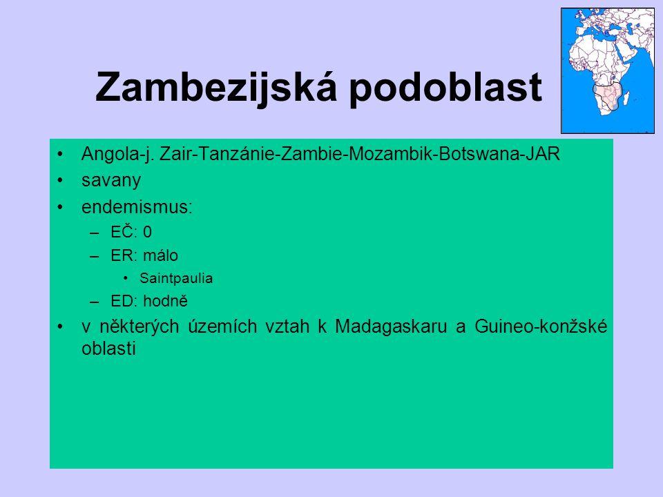Zambezijská podoblast Angola-j. Zair-Tanzánie-Zambie-Mozambik-Botswana-JAR savany endemismus: –EČ: 0 –ER: málo Saintpaulia –ED: hodně v některých územ