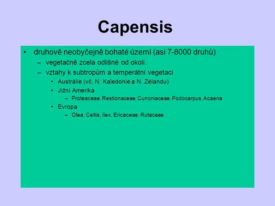 Capensis druhově neobyčejně bohaté území (asi 7-8000 druhů) –vegetačně zcela odlišné od okolí. –vztahy k subtropům a temperátní vegetaci Austrálie (vč