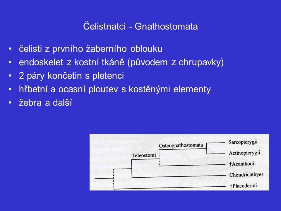 Čelistnatci - Gnathostomata čelisti z prvního žaberního oblouku endoskelet z kostní tkáně (původem z chrupavky) 2 páry končetin s pletenci hřbetní a ocasní ploutev s kostěnými elementy žebra a další
