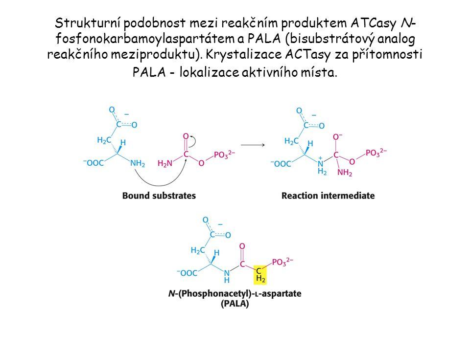 Strukturní podobnost mezi reakčním produktem ATCasy N- fosfonokarbamoylaspartátem a PALA (bisubstrátový analog reakčního meziproduktu).