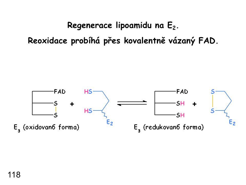 Regenerace lipoamidu na E 2. Reoxidace probíhá přes kovalentně vázaný FAD. 118