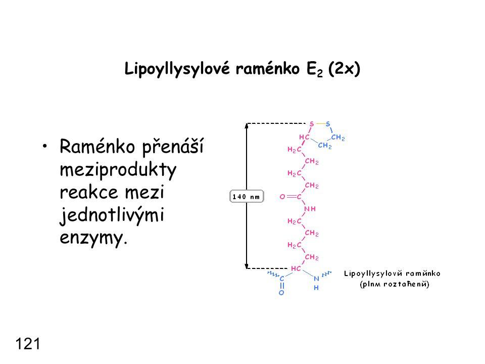 Lipoyllysylové raménko E 2 (2x) Raménko přenáší meziprodukty reakce mezi jednotlivými enzymy. 121