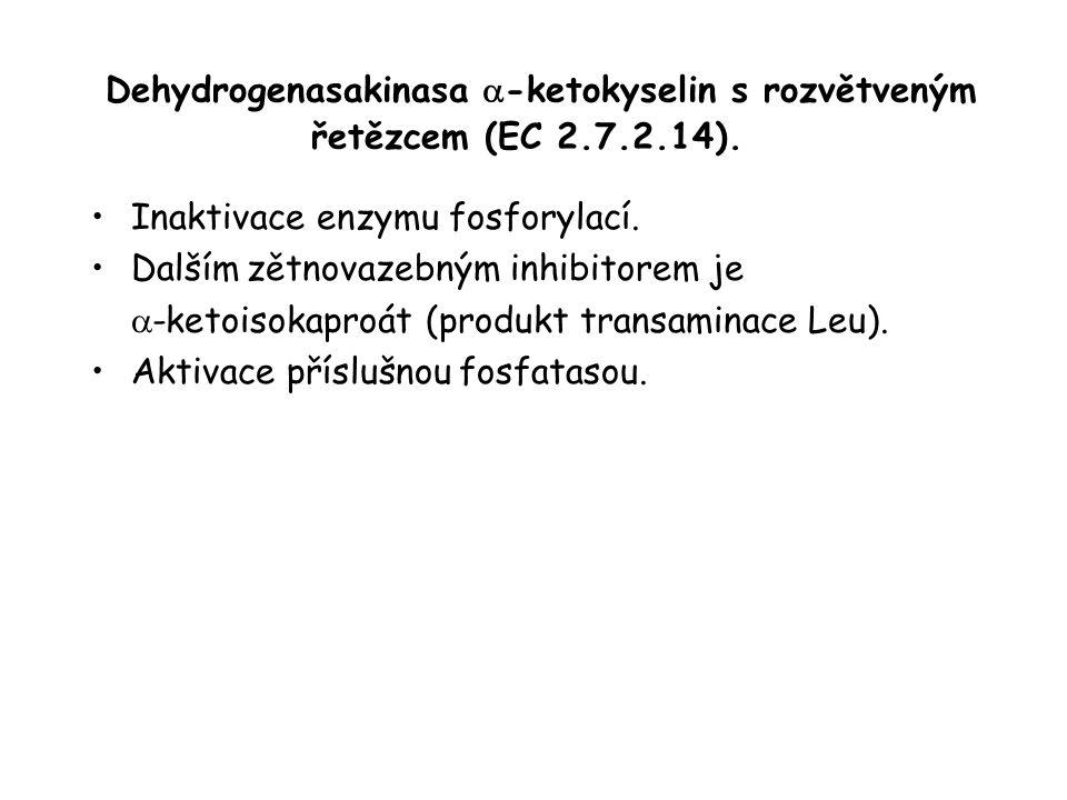 Dehydrogenasakinasa  -ketokyselin s rozvětveným řetězcem (EC 2.7.2.14).