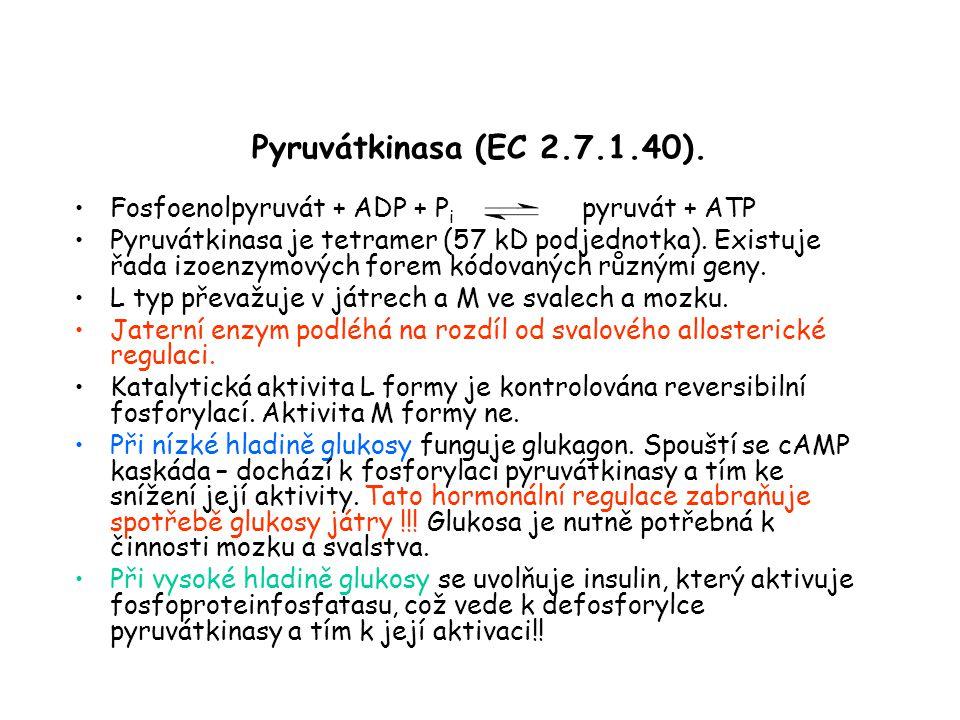 Pyruvátkinasa (EC 2.7.1.40).