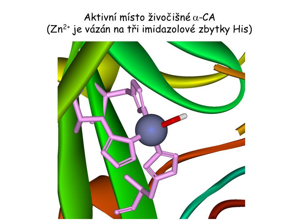 Aktivní místo živočišné  -CA (Zn 2+ je vázán na tři imidazolové zbytky His)