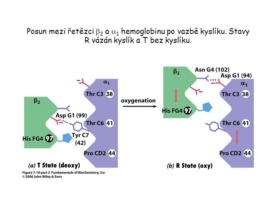 Posun mezi řetězci  2 a  1 hemoglobinu po vazbě kyslíku. Stavy R vázán kyslík a T bez kyslíku.