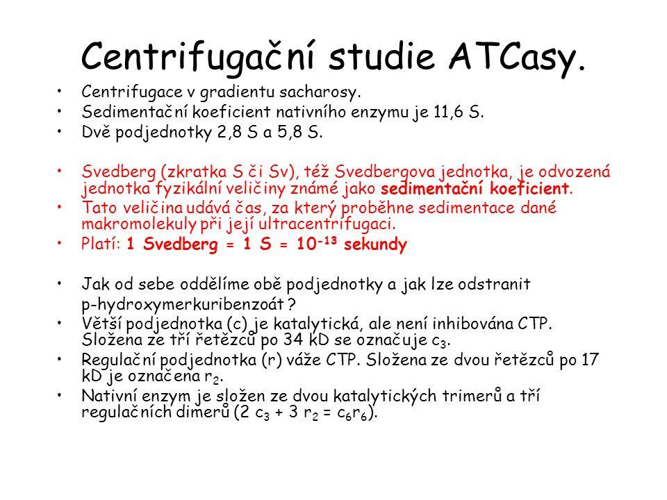 Centrifugační studie ATCasy.Centrifugace v gradientu sacharosy.
