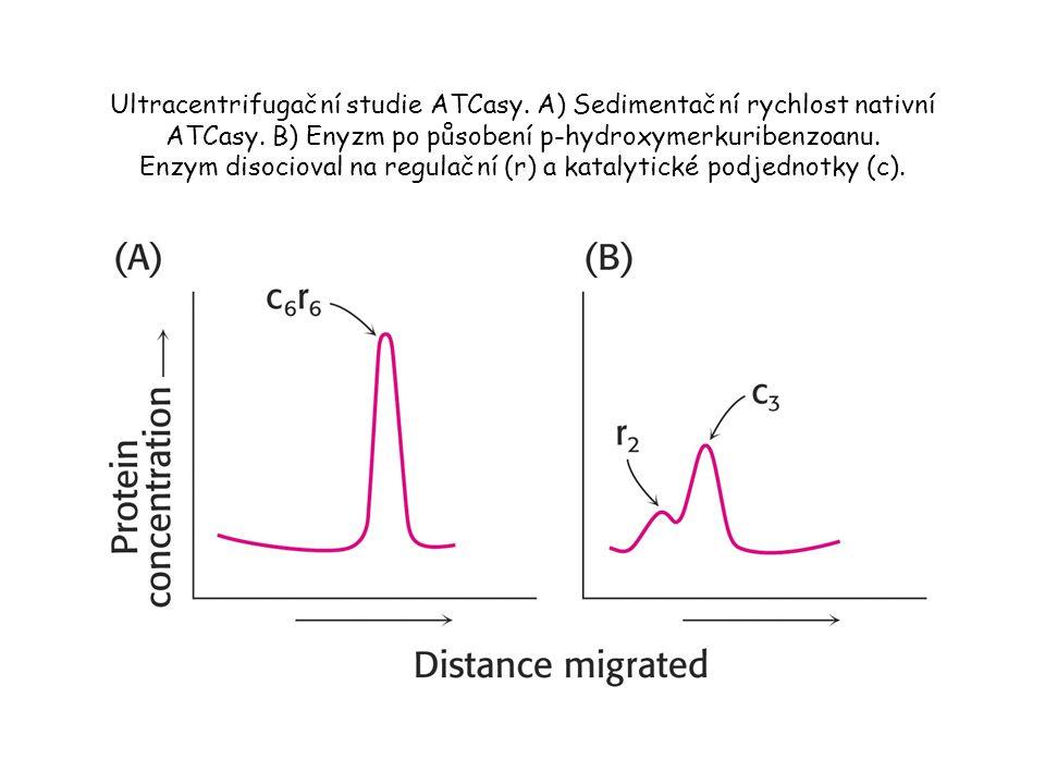 Ultracentrifugační studie ATCasy.A) Sedimentační rychlost nativní ATCasy.