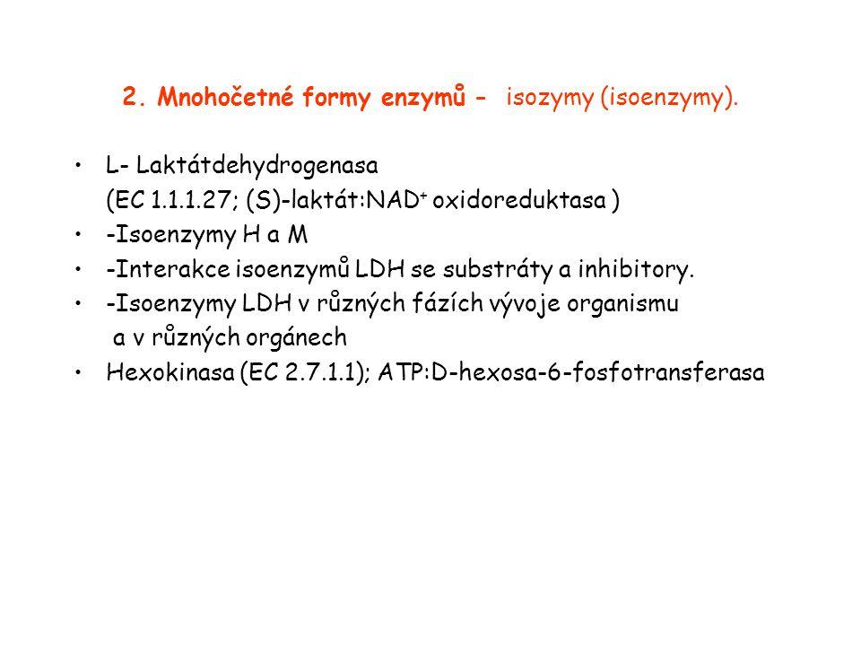 2.Mnohočetné formy enzymů - isozymy (isoenzymy).