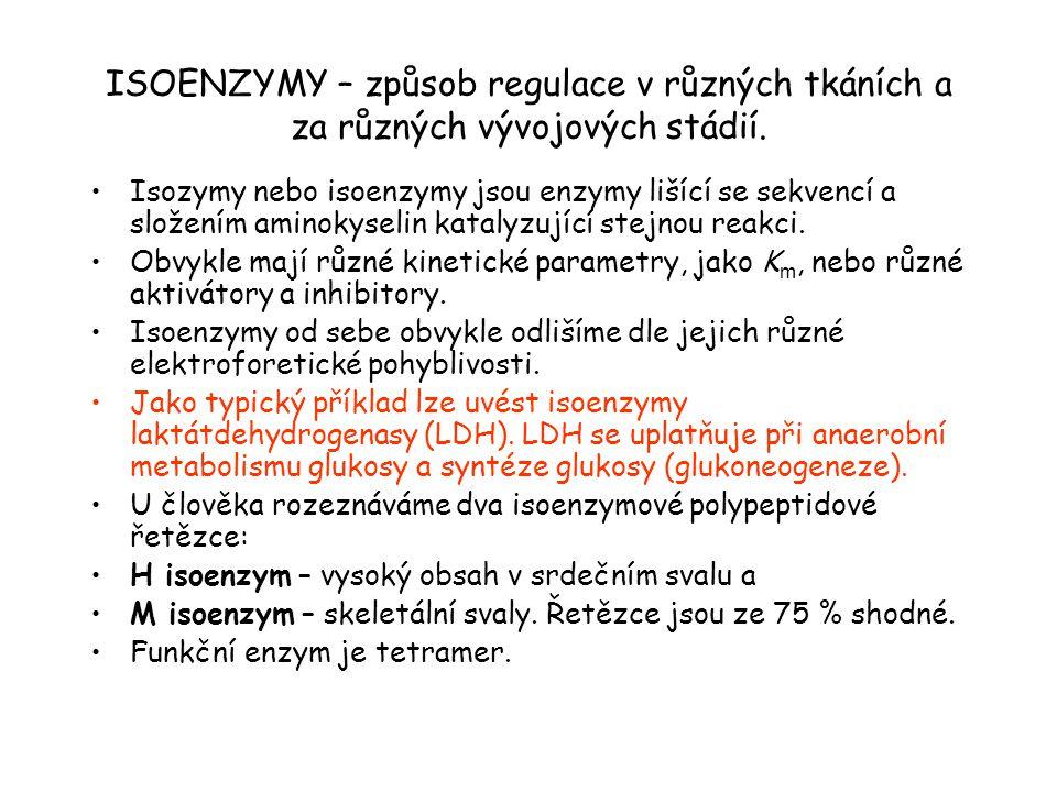 ISOENZYMY – způsob regulace v různých tkáních a za různých vývojových stádií.