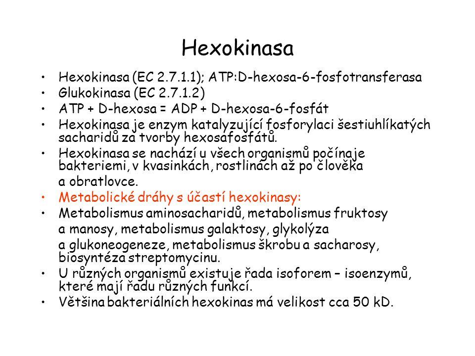 Hexokinasa Hexokinasa (EC 2.7.1.1); ATP:D-hexosa-6-fosfotransferasa Glukokinasa (EC 2.7.1.2) ATP + D-hexosa = ADP + D-hexosa-6-fosfát Hexokinasa je enzym katalyzující fosforylaci šestiuhlíkatých sacharidů za tvorby hexosafosfátů.
