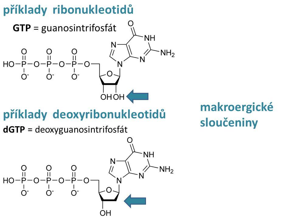 příklady ribonukleotidů GTP = guanosintrifosfát příklady deoxyribonukleotidů dGTP = deoxyguanosintrifosfát makroergické sloučeniny